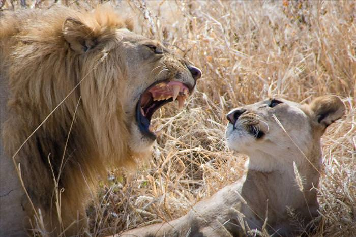Beautiful Animals Safaris Safari Amazing Beautiful: The Beautiful Animals You'll See On Safari!