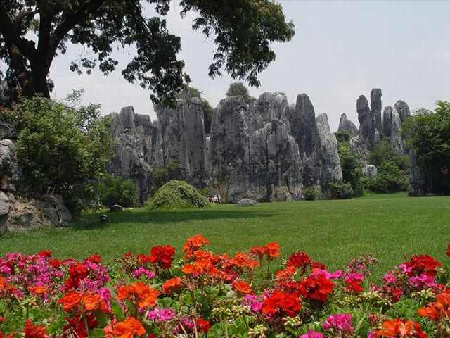 stone forest photos