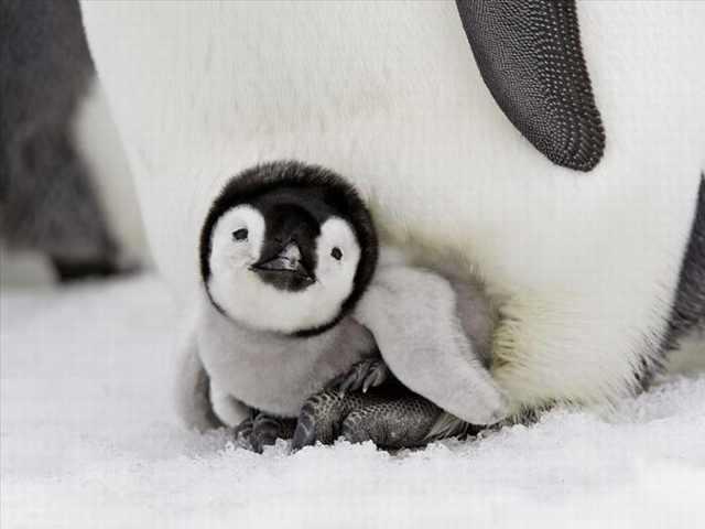 penguin photos
