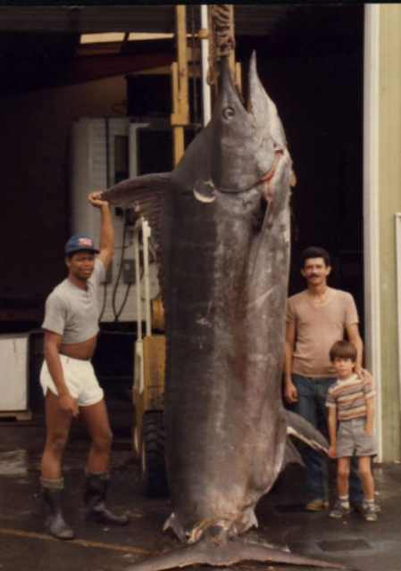 huge caught fish