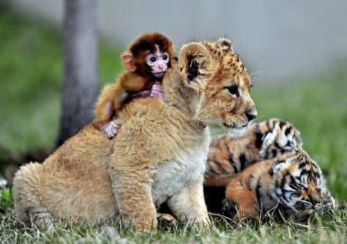 great animal photos