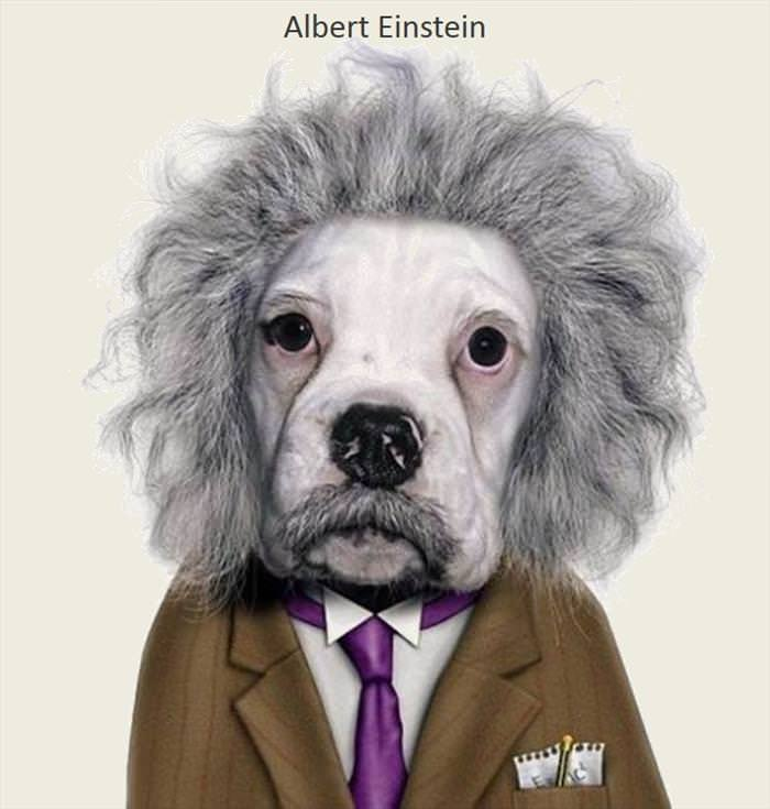Pets as Famous People
