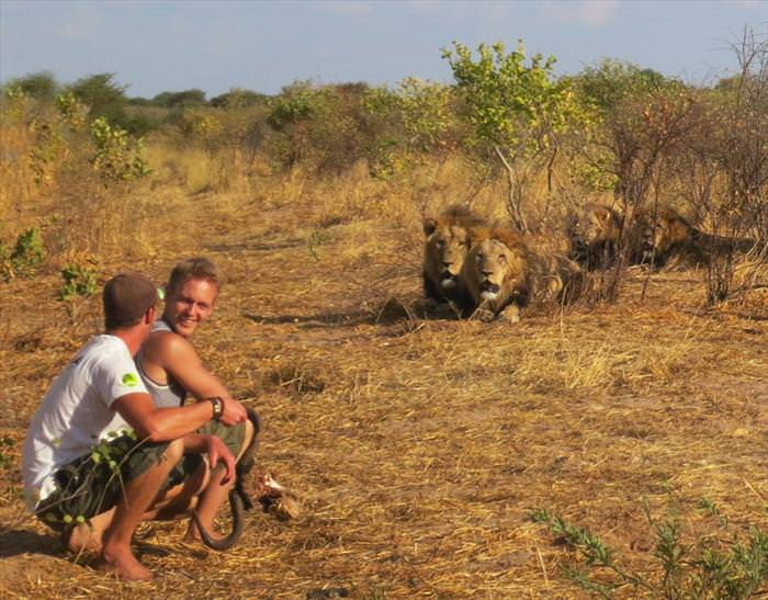 lion encounters