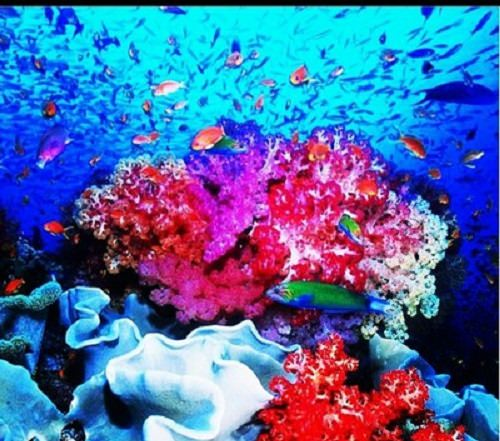 photo of Coral reef