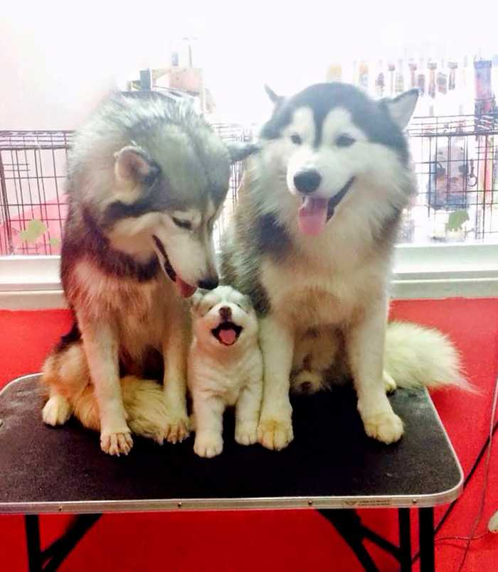The Cutest Animal Family Portraits!