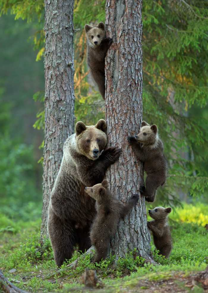 The Cutest Animal Family Portraits!
