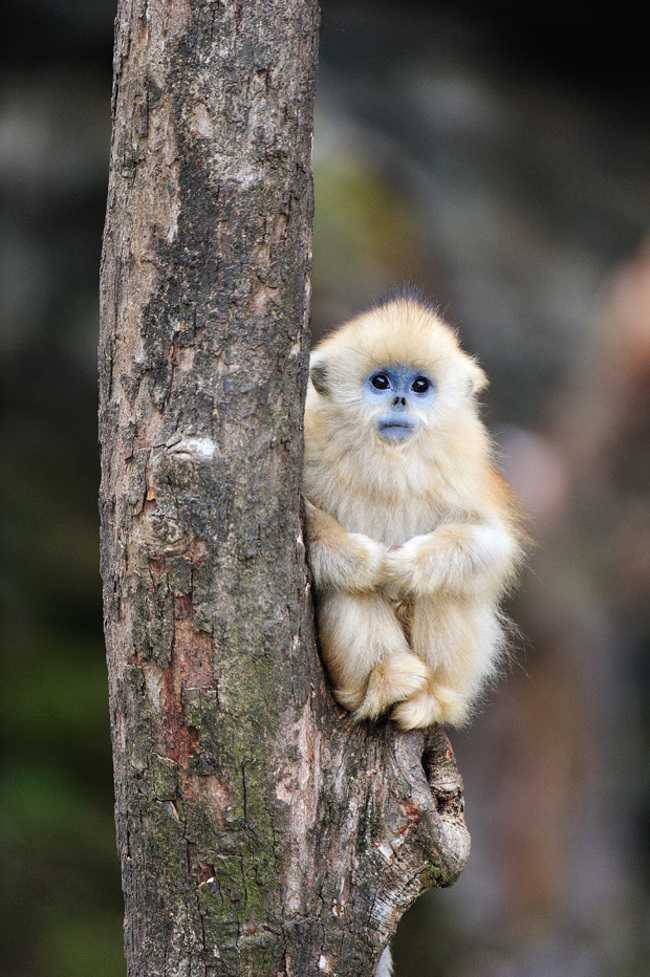 Adorable monkey babies youll fall in love with nature babamail adorable monkey babies voltagebd Image collections