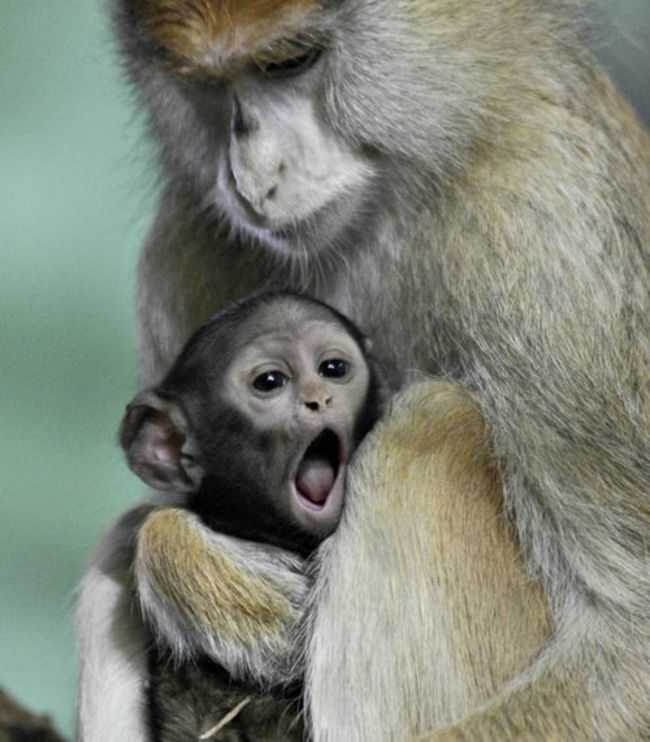 Adorable Monkey Babies