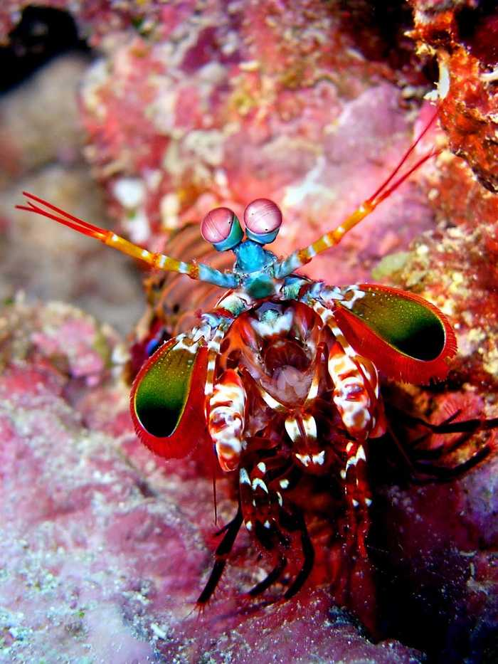 Insanely Colorful Animals