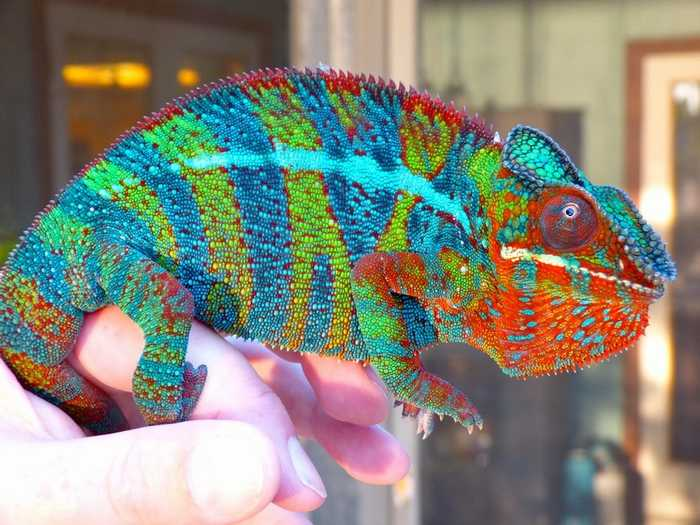 26 amazingly colorful animals Design Photography BabaMail