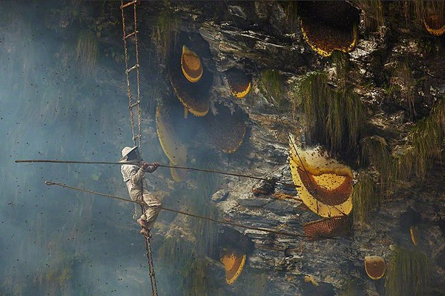 The Fascinating Honey Hunters of Nepal