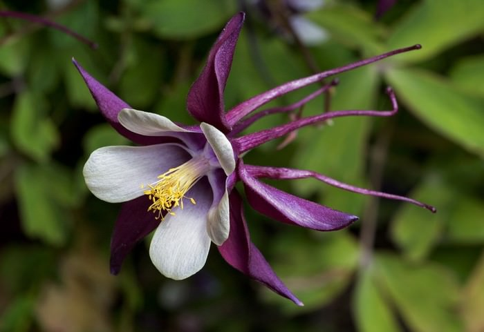 Resplendent and unusual flowers m ng c a c u h c sinh trung