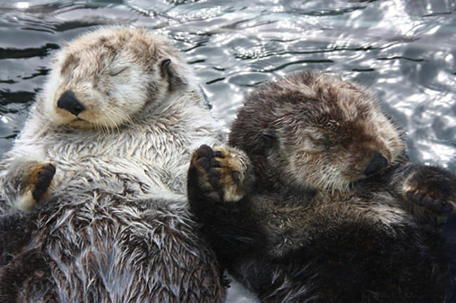 17 Romantic Animals that Will Make You Jealous