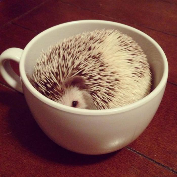 30 Adorable Baby Animals Inside a Cup