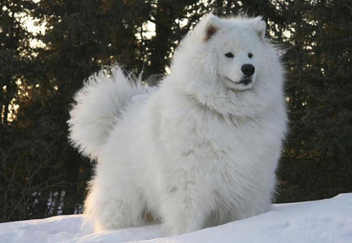 30 furry animals