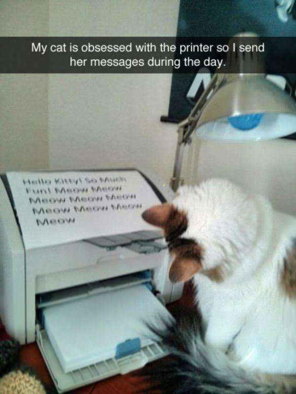 Cats Cats Cats!