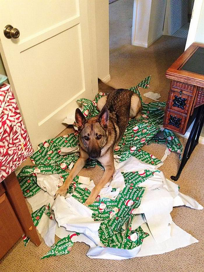 30 Dogs and Cats That Ruined Christmas