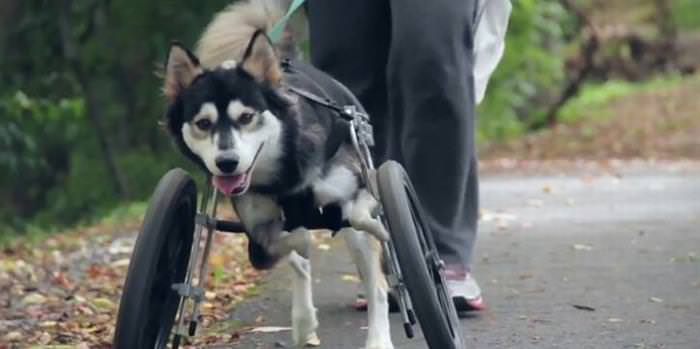 How One Dog Was Able to Run Again...With 3D Printed Legs