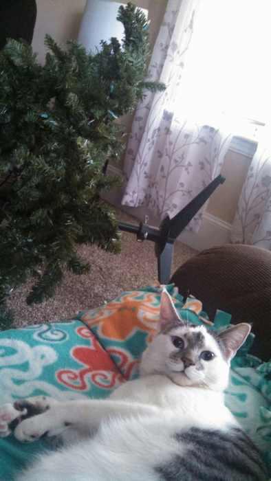 Cat day photos