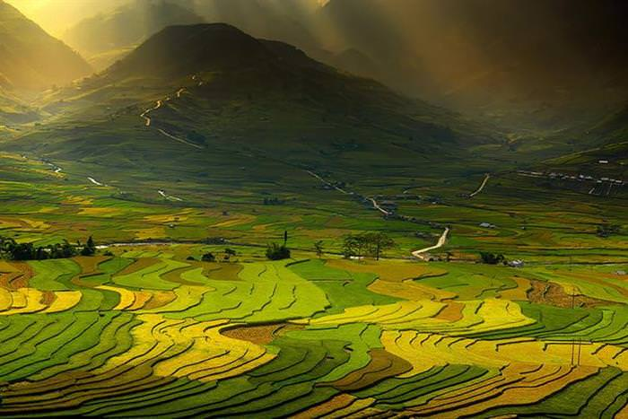 20 Abstract Paintings That Are Actually Rice Fields!