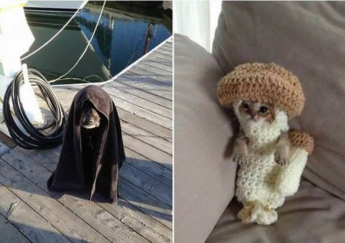 17 Adorable Pets Staying Warm this Winter Season