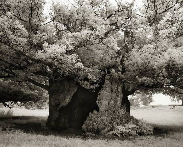 A Determined Woman Spends 14 Years Photographing Ancient Trees