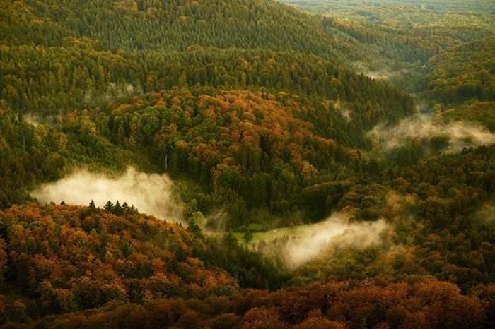 15 Amazing Forests from Around the World