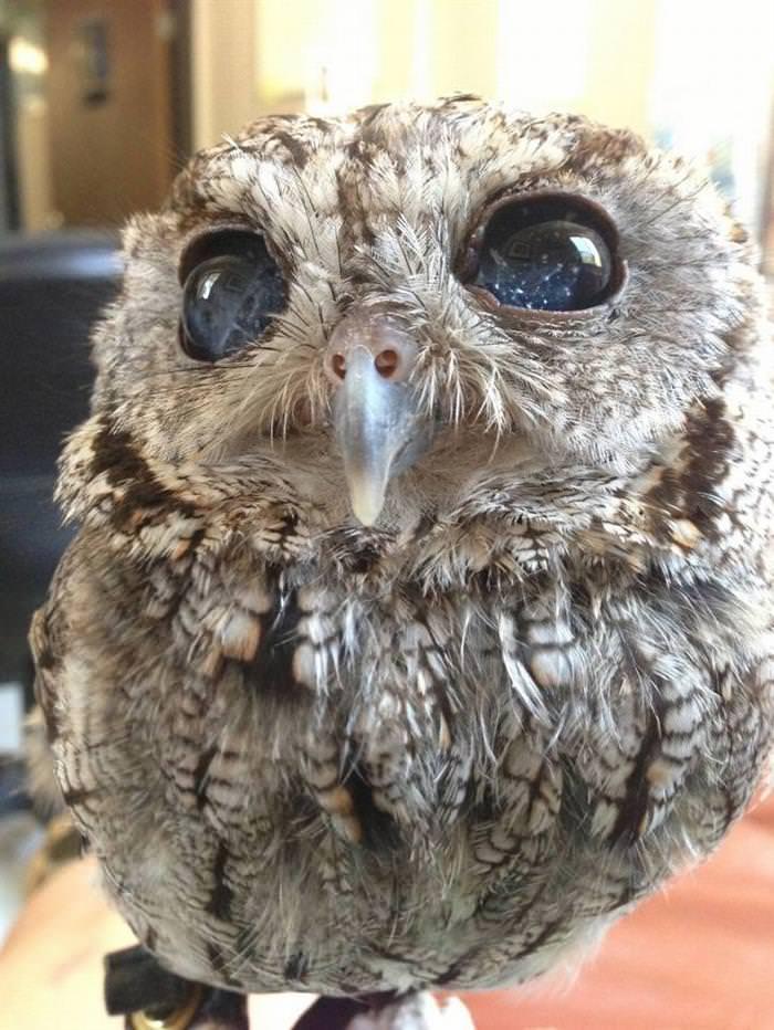 30 Amazing Owls