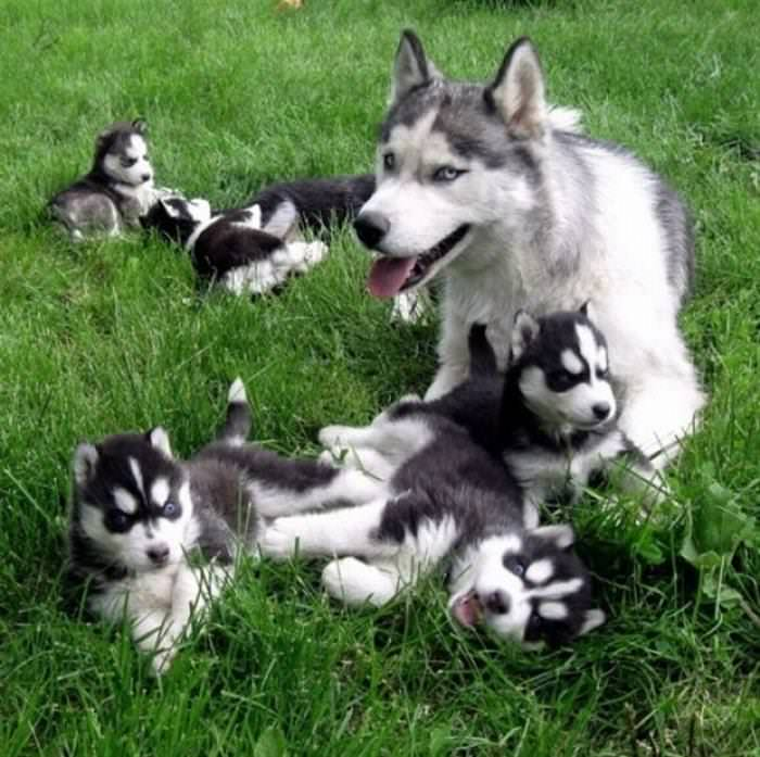 Lovable Baby Animals You Just Want To Cuddle Nature BabaMail - 30 animals cutest parents