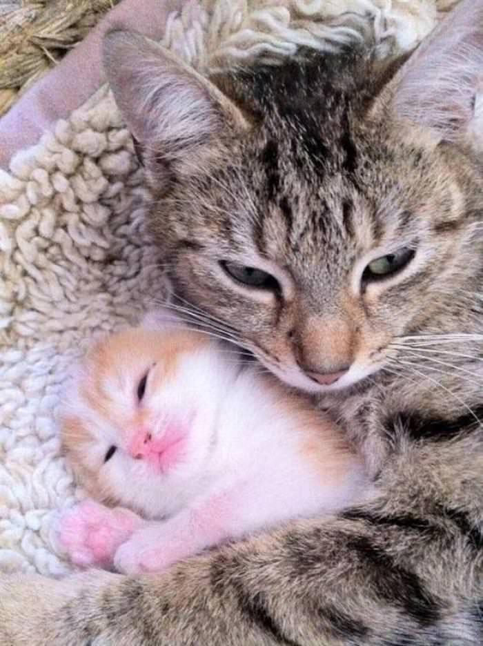 30 Cutest Animals CutestPaw