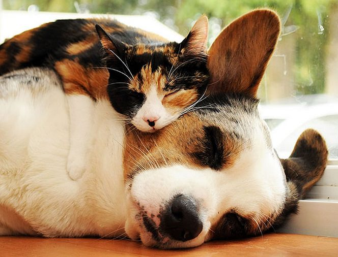 animals sleeping on each other