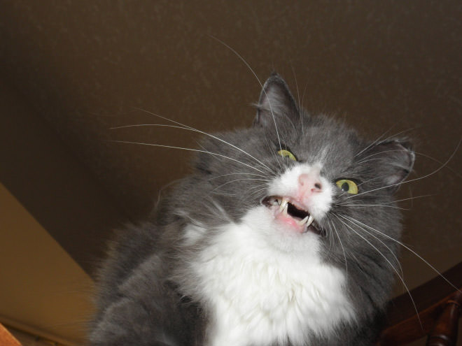 cats mid sneeze