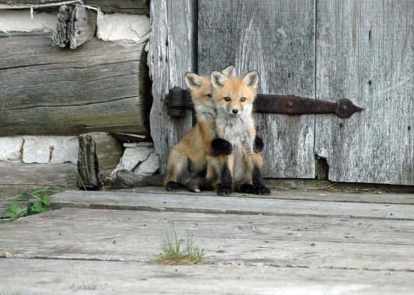 badly hiding animal