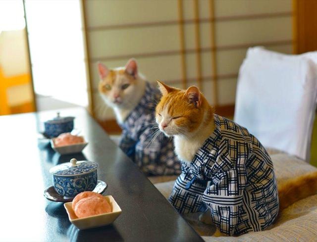 cats visiting japan
