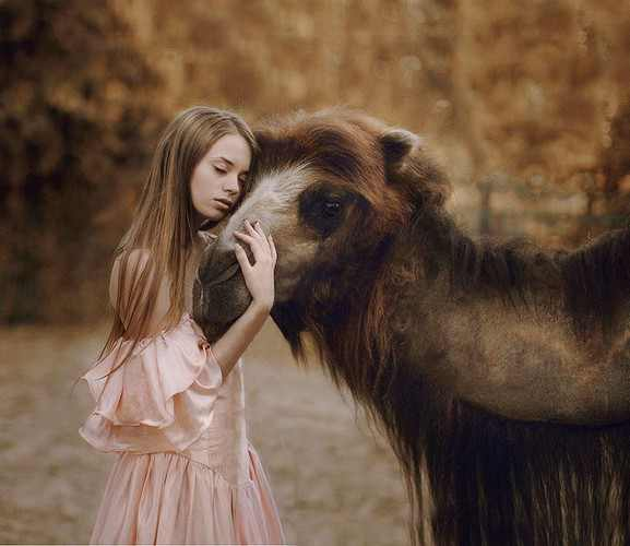 photography animals models