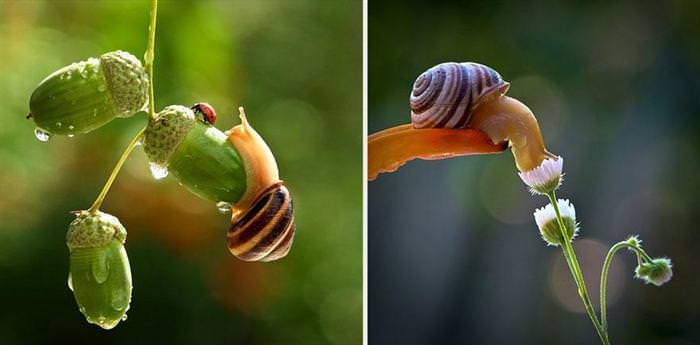 beautiful photos of snails