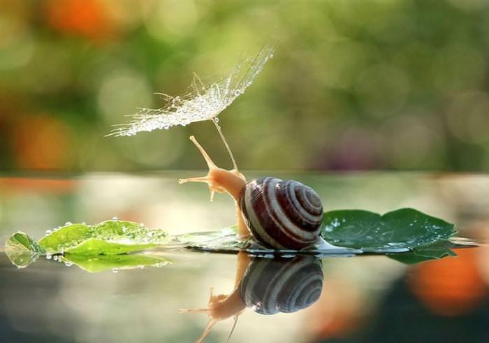 beautiful photos of snails