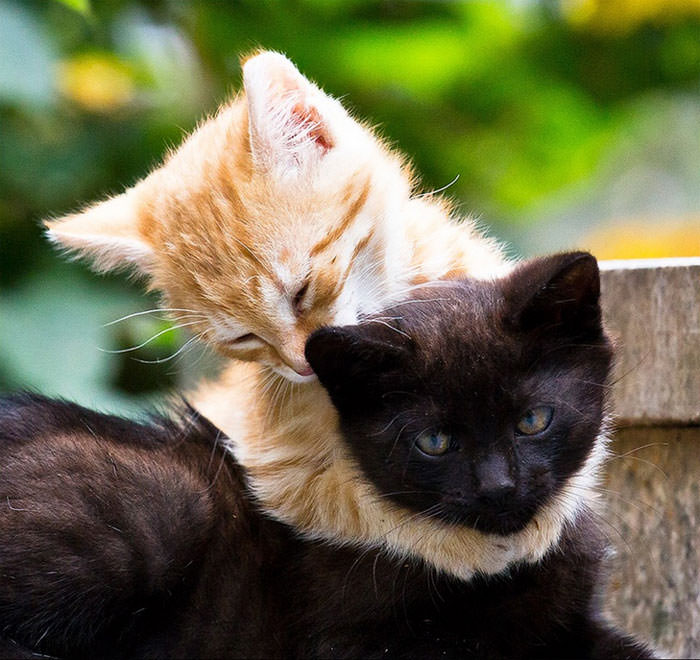 Seeing These Animals Hugging I Have A Silly Grin Cute Overload - 25 heartwarming moments animals hugging
