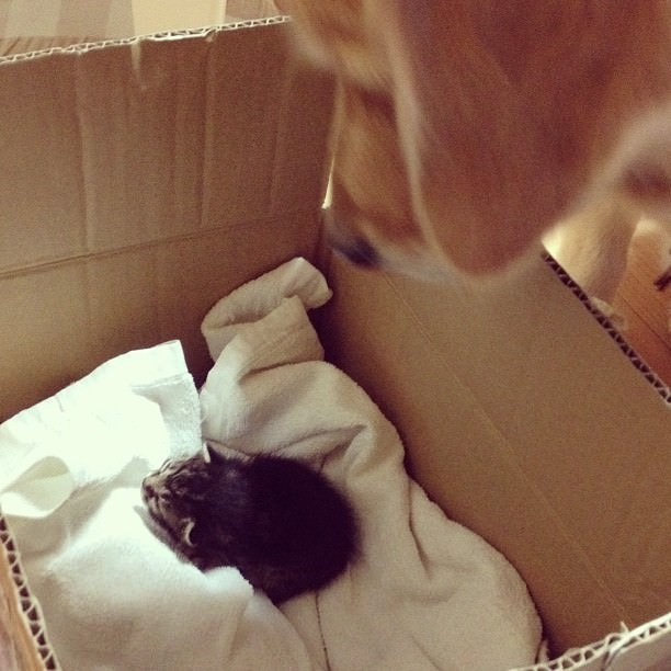 dog adopts cat