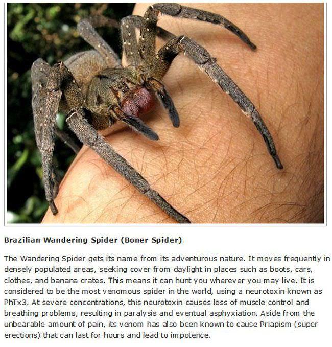 10 dangerous animals
