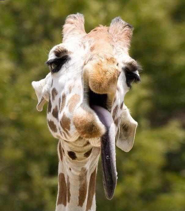 animals making stupid faces