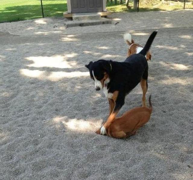 animal bastards