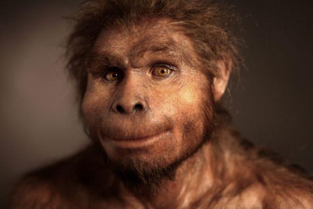 humanoid reconstructions