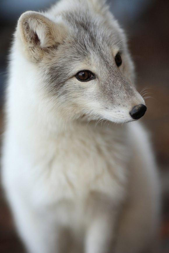 Animal photos