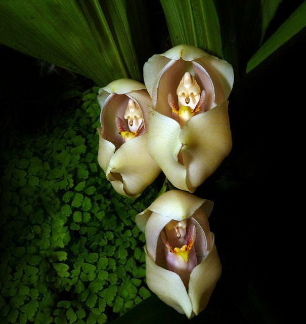 flowers that look like something else
