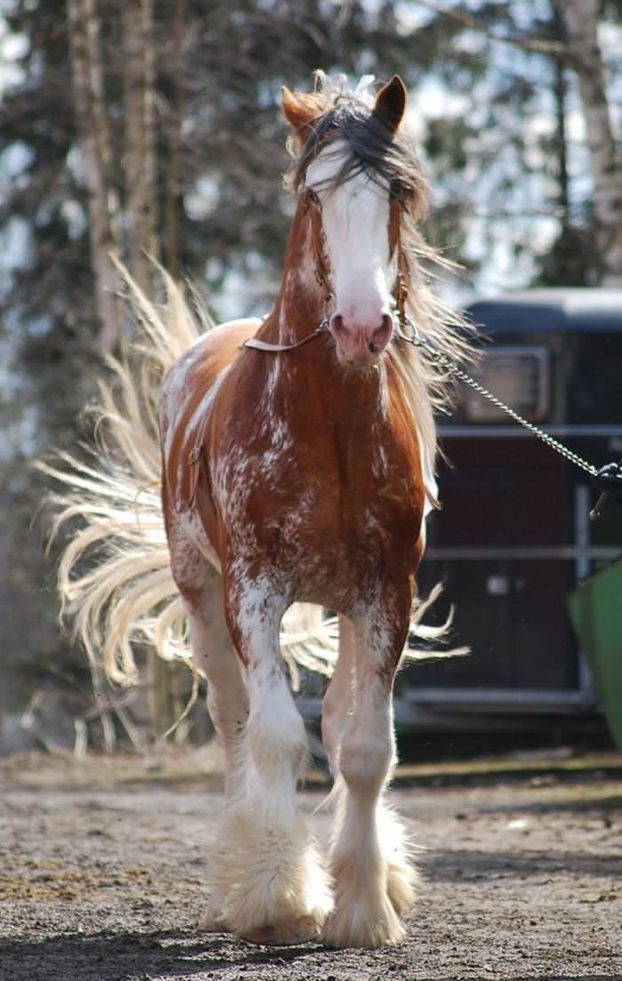 The most beautiful horses with beautiful hair | Nature - BabaMail