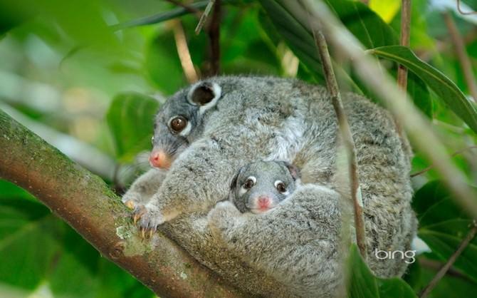 adorable australia