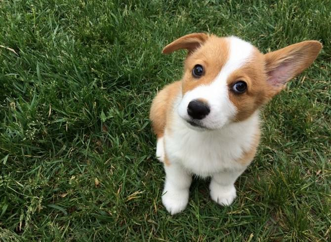 one ear pupppies