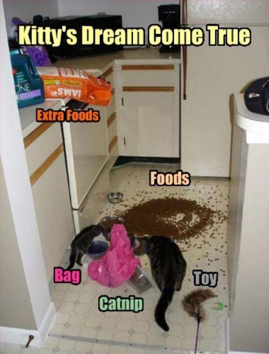 cat day