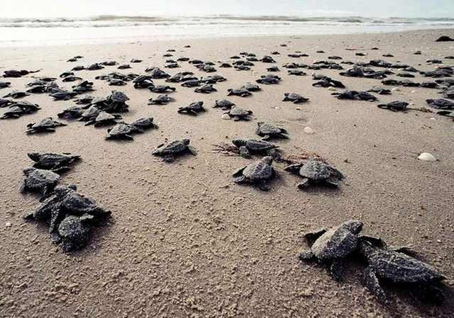 Animal Migrations